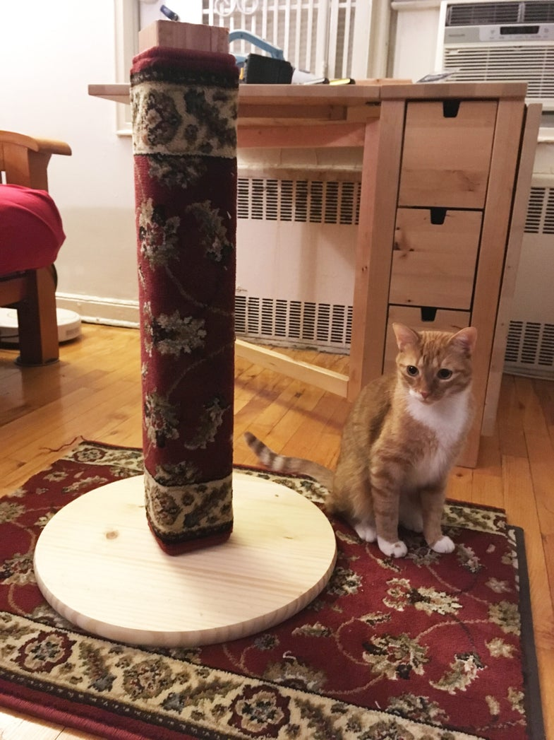 cat sits next to scratching post