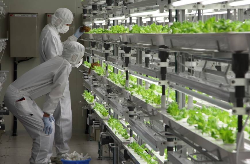 Out Of Old Factory, Japanese Company Sells… High-Tech Lettuce