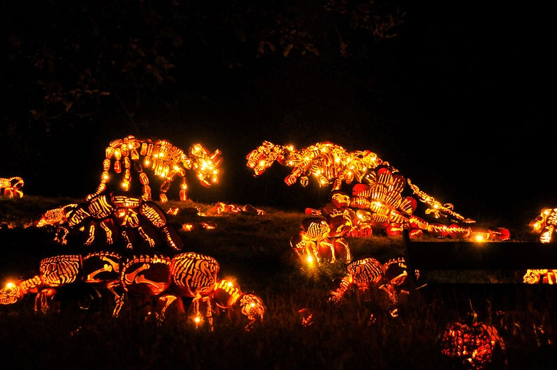 Jack-O'-Lantern Dinosaurs And Other Amazing Images From This Week