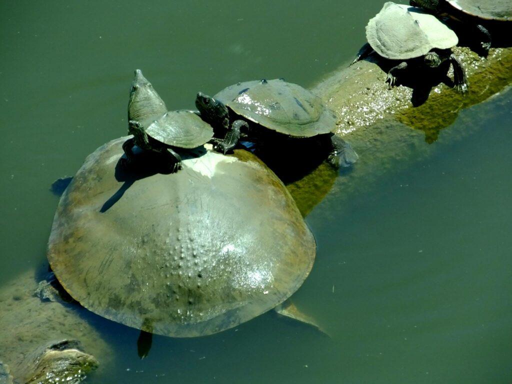 """""""Turtles"""""""