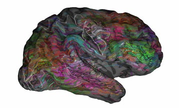 A 3D Map Of The Brain Shows How We Understand Language