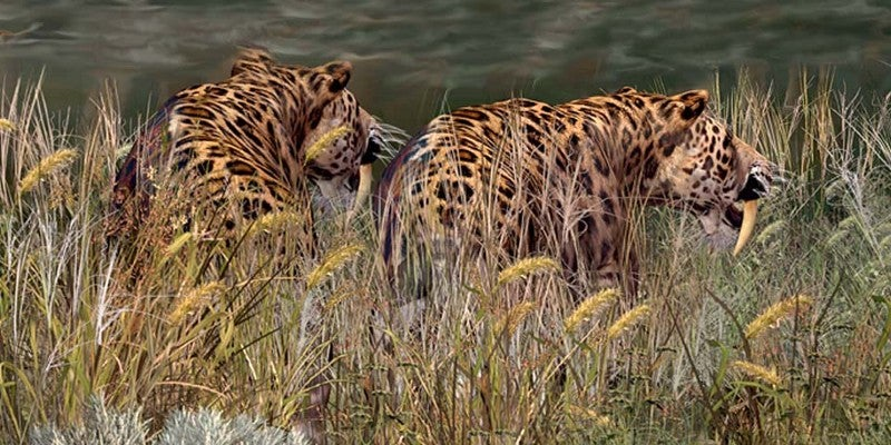 Models of sabre-toothed cats