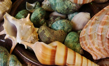 Why Packaging And Fallout Shelters Should Take Design Cues From Seashells