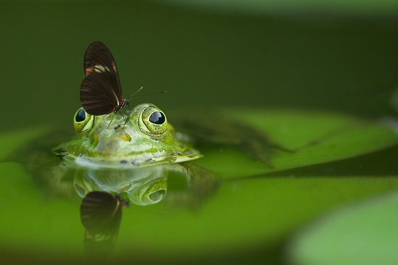 a butterfly sits on a frog