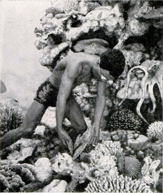 Archive Gallery: PopSci's Love Affair With Coral