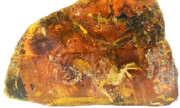 This adorable lil baby bird was perfectly preserved in amber for 99 million years