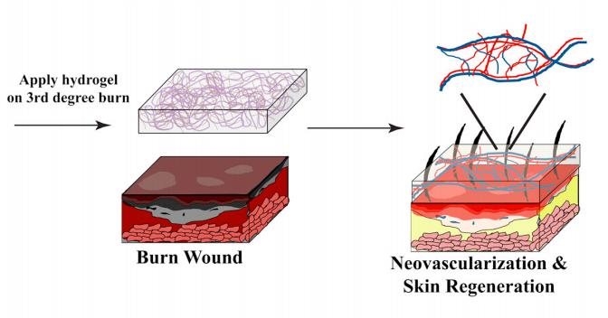 Wound-Treating Jelly Regenerates Fresh, Scar-Free Skin