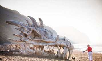 Could Dragons Have Existed If Evolution Had Taken A Different Turn?