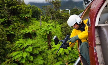Zapping Invasive Plants from a Helicopter