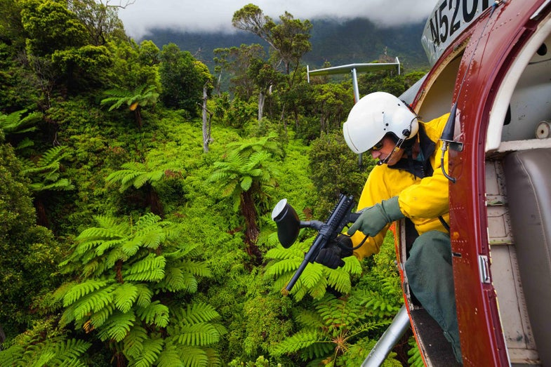 Trae Menard leans out of a helicopter with a paintball gun over a patch of healthy Australian tree ferns
