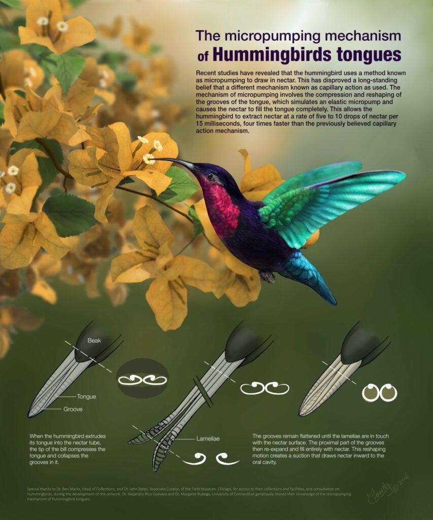 """Hummingbird"