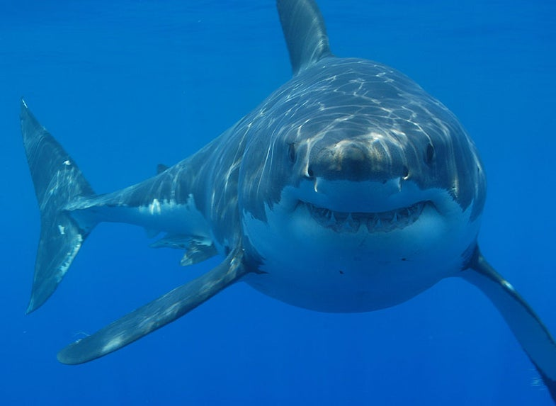 Shark Skin Biomimetics Takes a Bite Out of Infection Spread