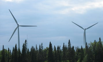 Bats Confuse Wind Turbines With Trees And Fly Toward Death