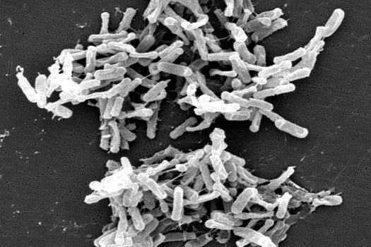 Curing Gut Problems With Synthetic Pseudo-Poo