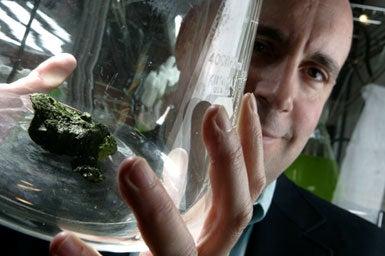 Algae's Fuel Potential