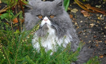 Cat Bites Are Linked To Depression
