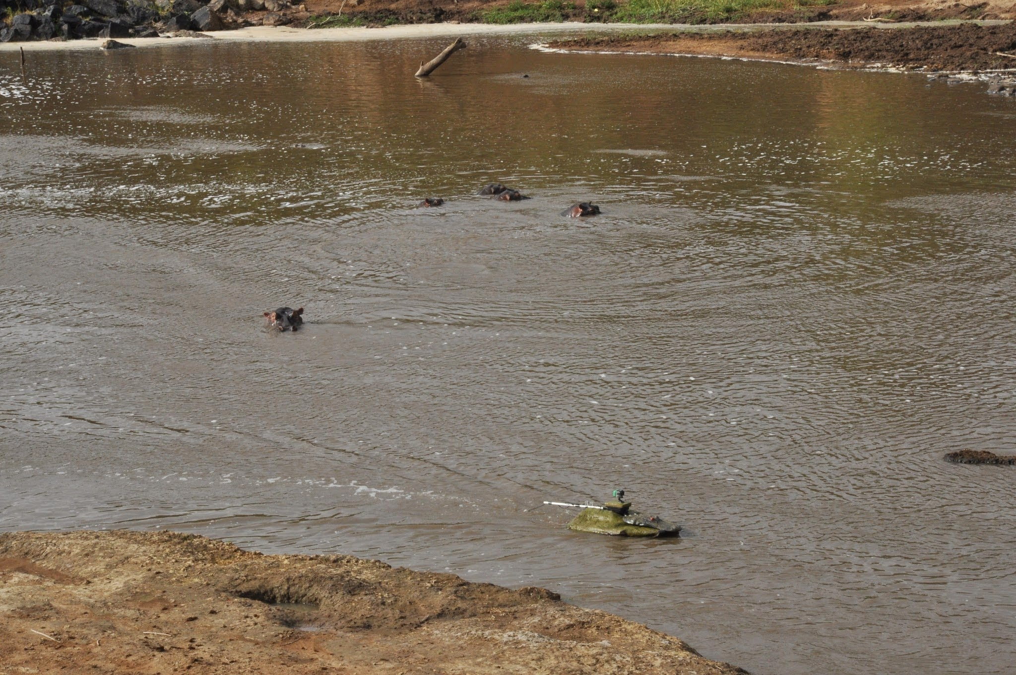 Robo-Boats Disguised As Crocodiles Sneakily Study Hippo Poo