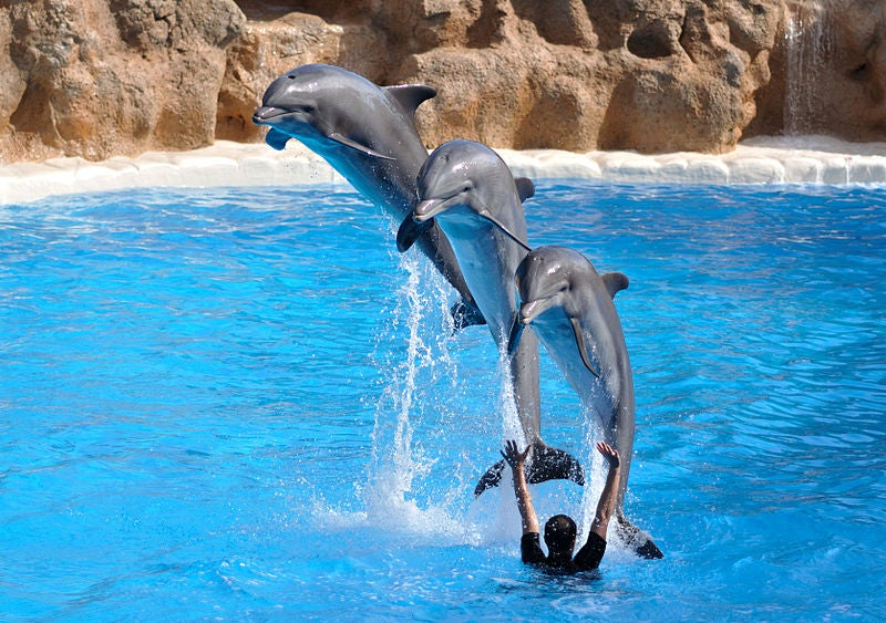 Dolphins Know Other Dolphins By Name Even After Decades Apart