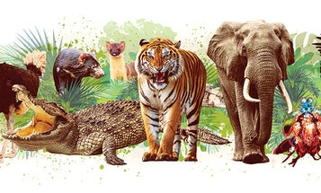 The world's most powerful animals, ranked