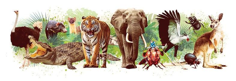 Elephant, tiger, kangaroo, ostrich, crocodile, mantis shrimp, and other most power animals