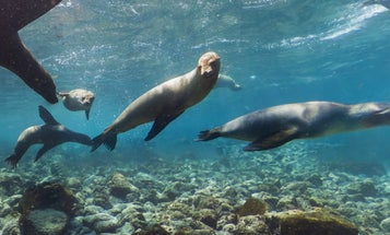 The Coolest Things We Saw Exploring The Galápagos Islands In Google Street View