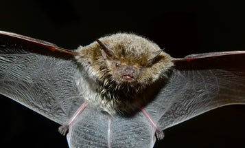 Carnivorous Plant Has An Evolutionary Alliance With Local Bats