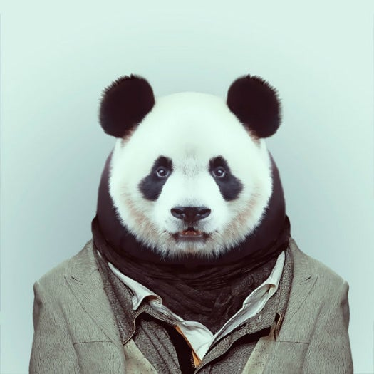 Super-Fashionable Zoo Animals And Other Amazing Images From This Week