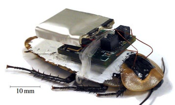 Cyborg Cockroaches: How They Work