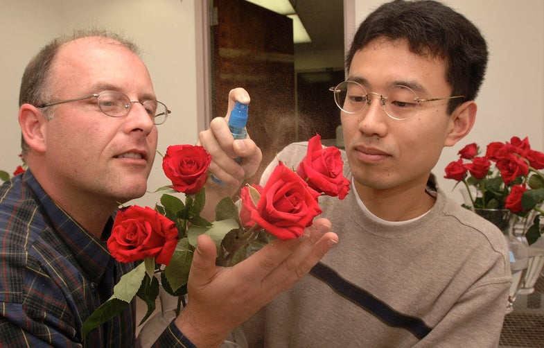 Next Year, Give Your Valentine Custom-Engineered Flowers With Bespoke Scents