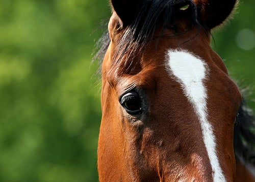 Horses Can Learn To Communicate Specific Needs To People