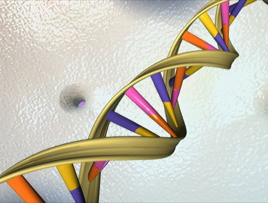 What's The Half-Life Of DNA?