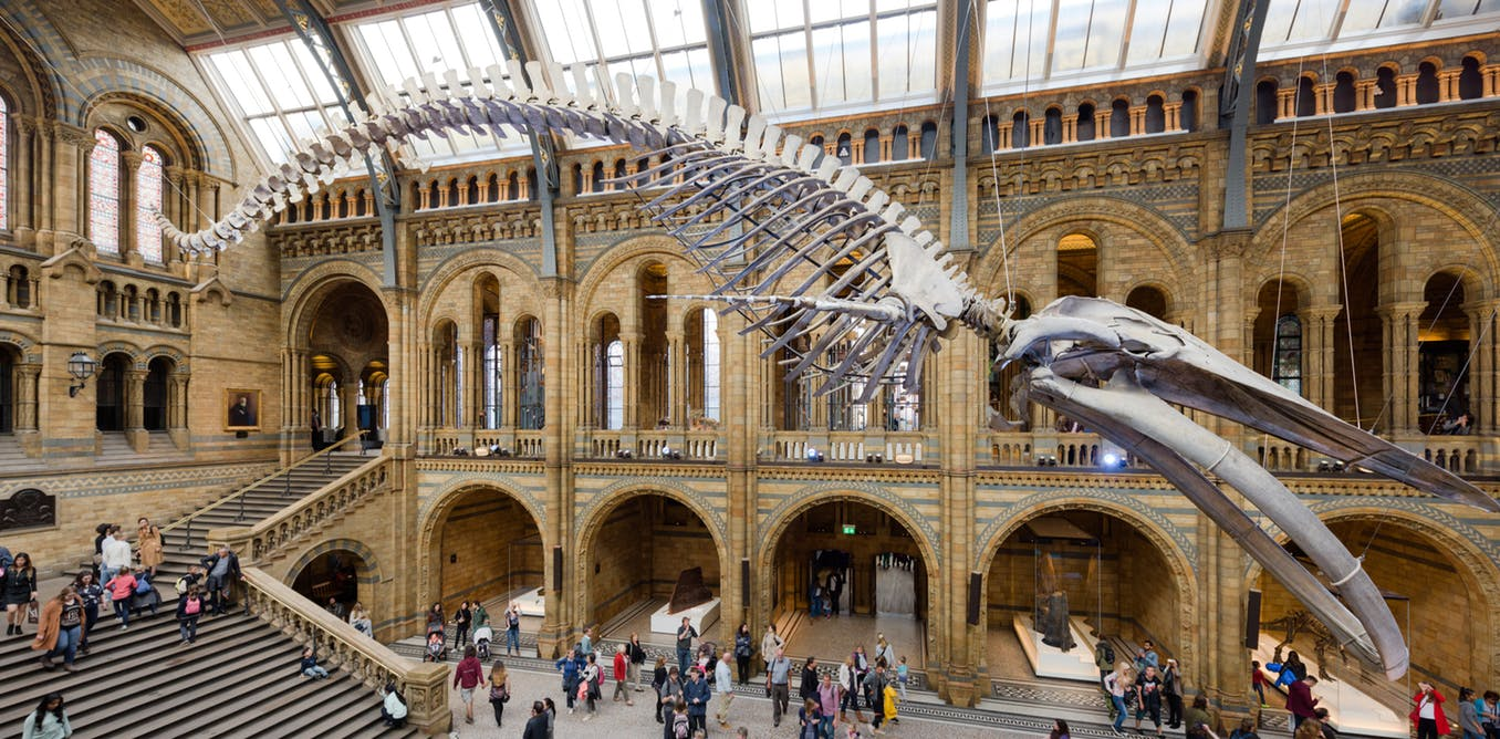 Four ways natural history museums can skew reality