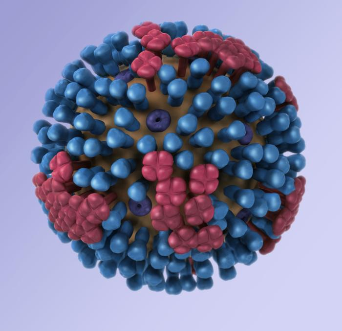 The Flu Virus Can Tell Time. Here's Why You Should Care