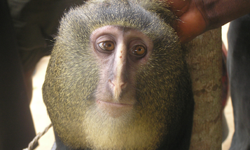 The 10 Coolest Species Discovered In 2012
