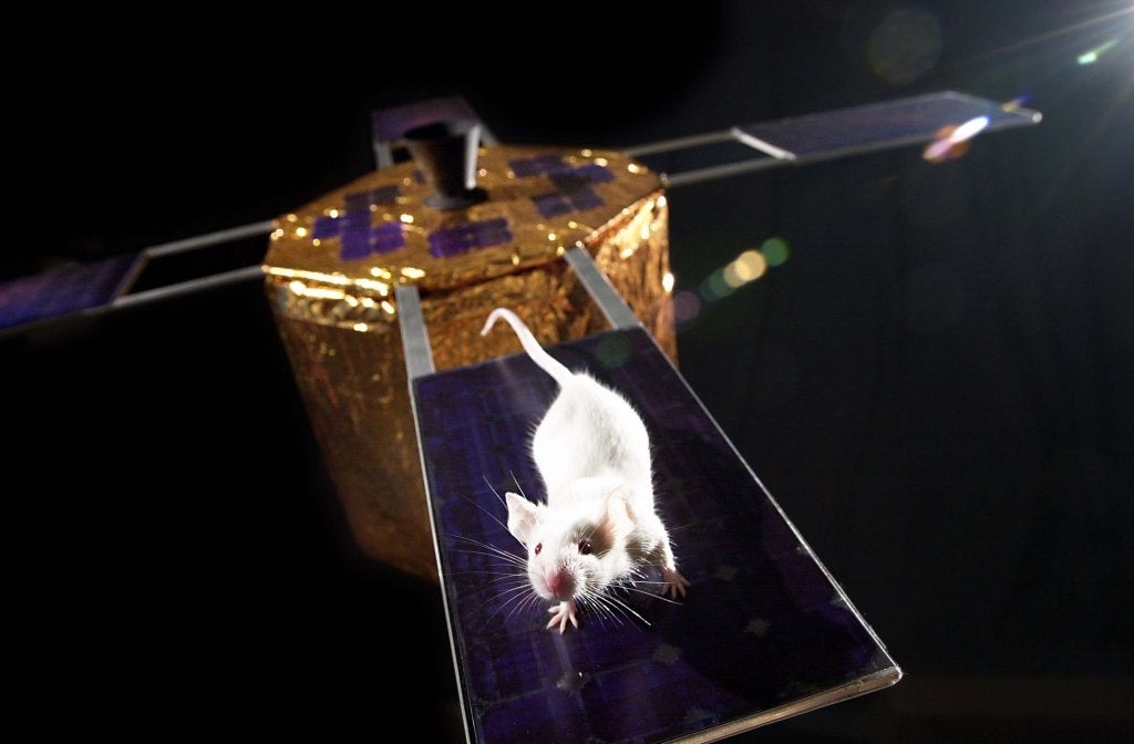 Mousetronauts To Live In Space For The Longest Stretch Yet