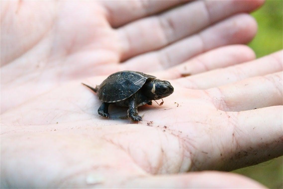 It's World Turtle Day