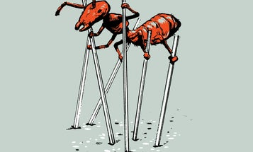 I glue stilts to ants