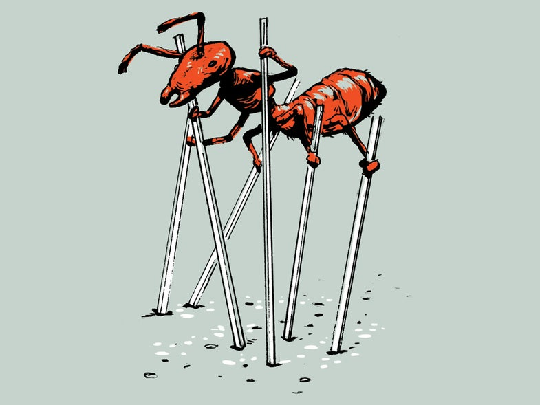 ant on stilts illustration