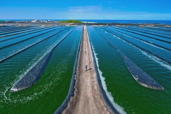 a farm covered in green tanks of algae