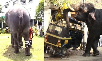 Take Down Rampaging Elephants with Automatic Entangling Leg-Cords, Star Wars Style