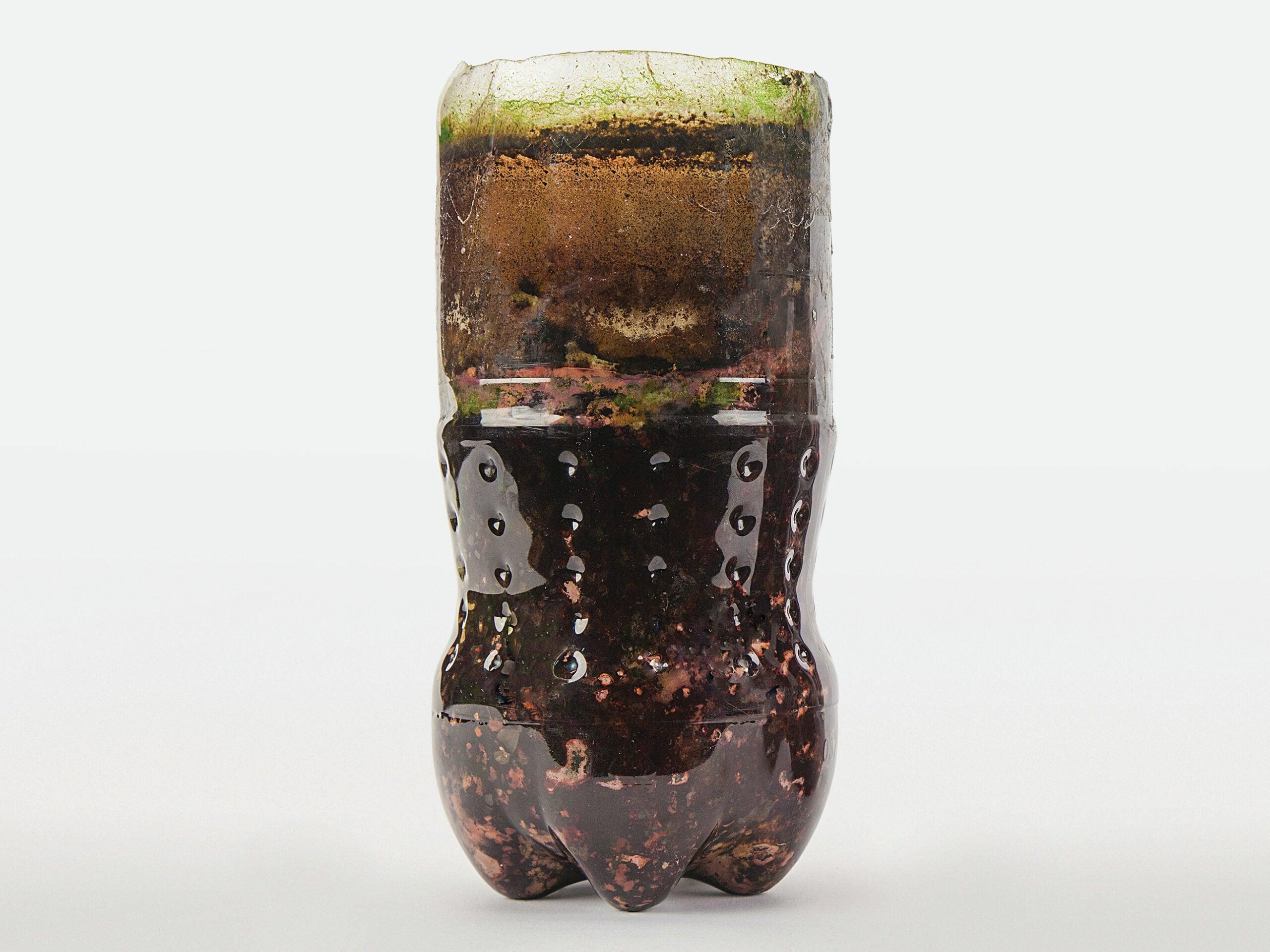 Grow A Bacterial Zoo In A Bottle