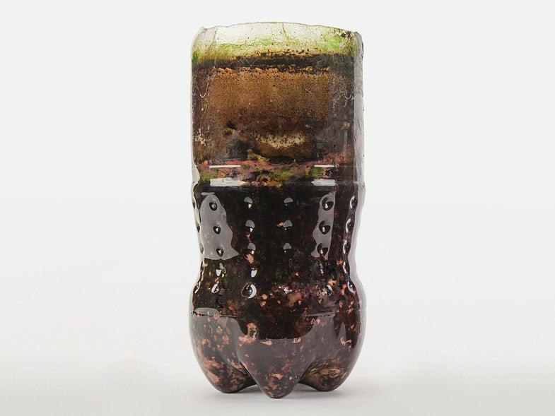 Bacterial zoo in a bottle