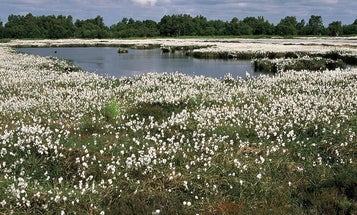 Bogs are beautiful, swampy records of human history