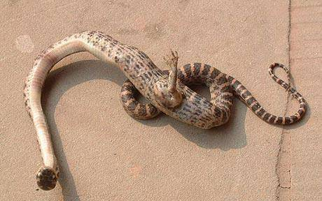 Snake With Clawed Foot Found In China