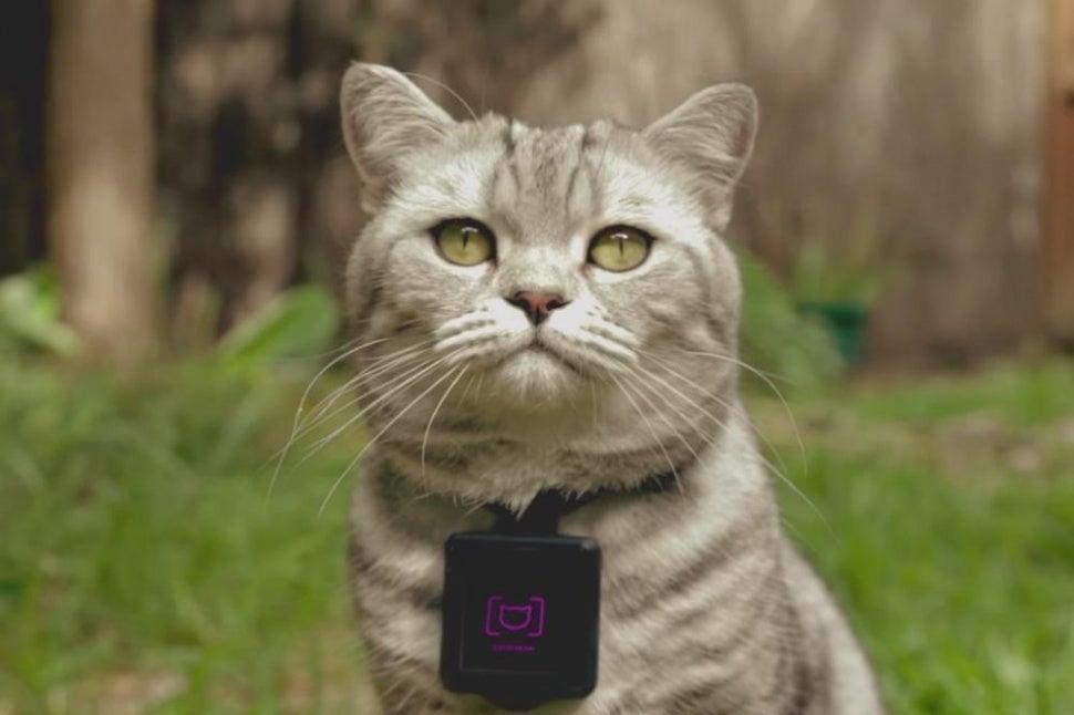 Whiskas' Catstacam collar charts your pet's adventures on Instagram