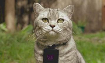 Catstacam App Reveals Cats Are Terrible Photographers