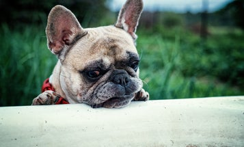 Your dog gets allergies for the same reasons you do