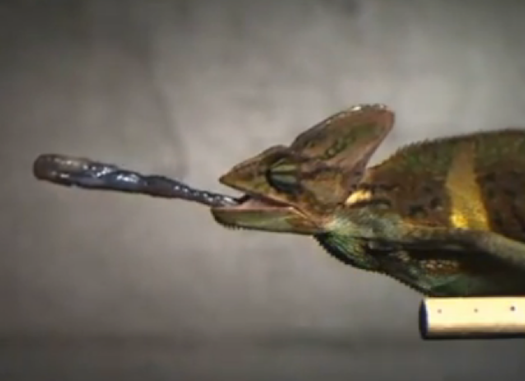 Amazing Videos Of Animals Catching Their Prey In Slow-Mo