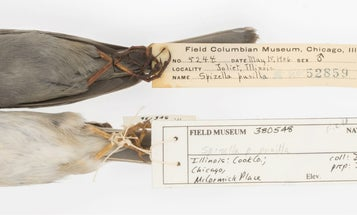 These dirty birds show why we need natural history museums
