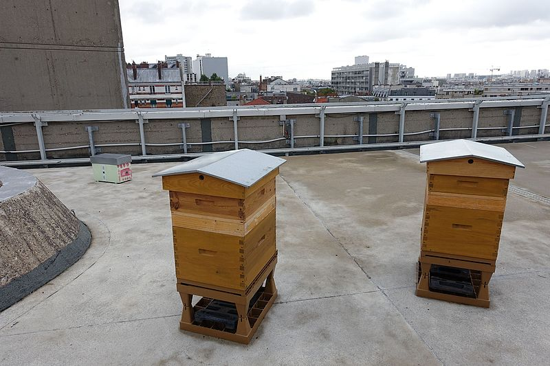 beehives on a city roof